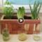 Plantar vegetais a partir dos restos